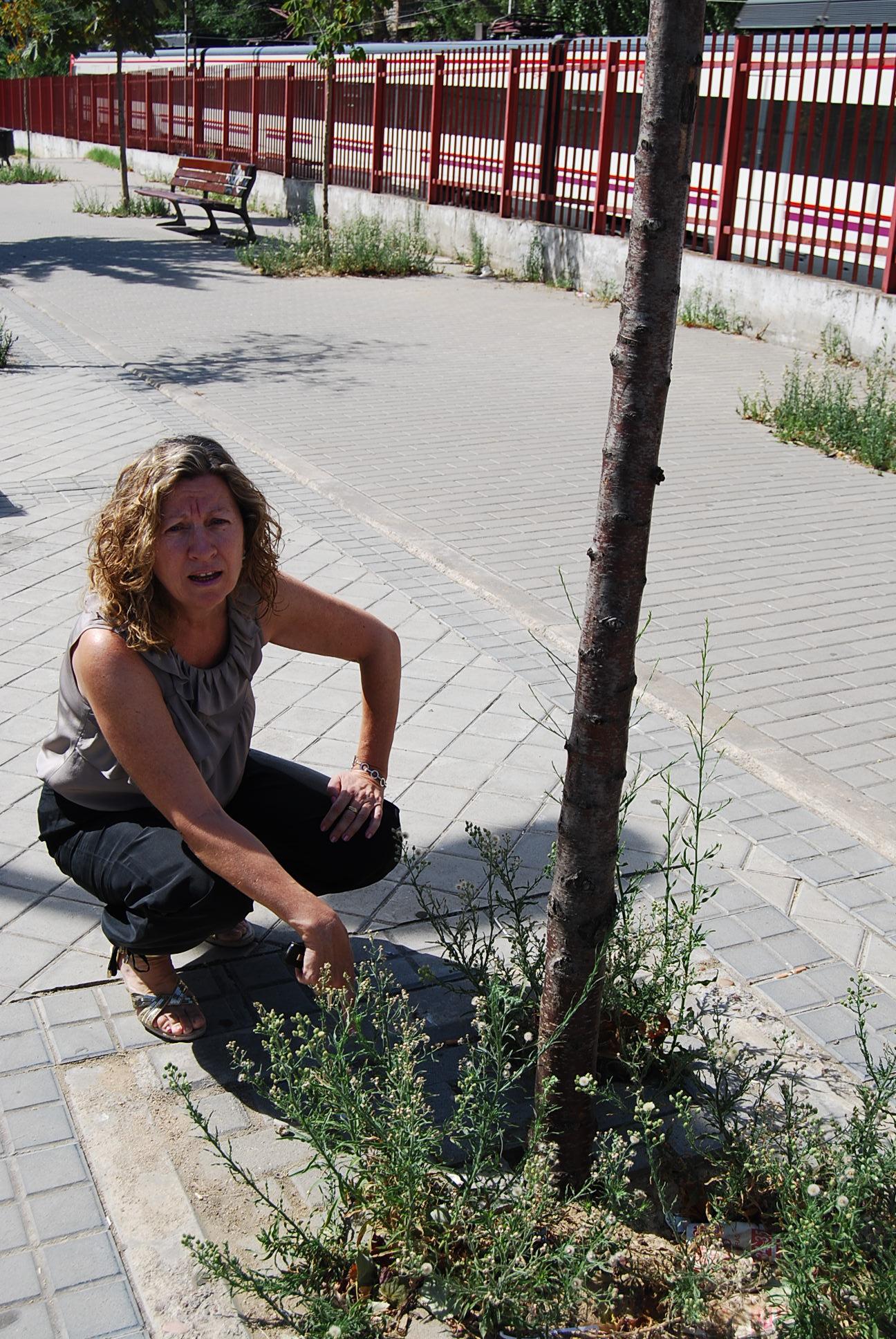 laura cillero denuncia el estado de árboles barrio Iviasa